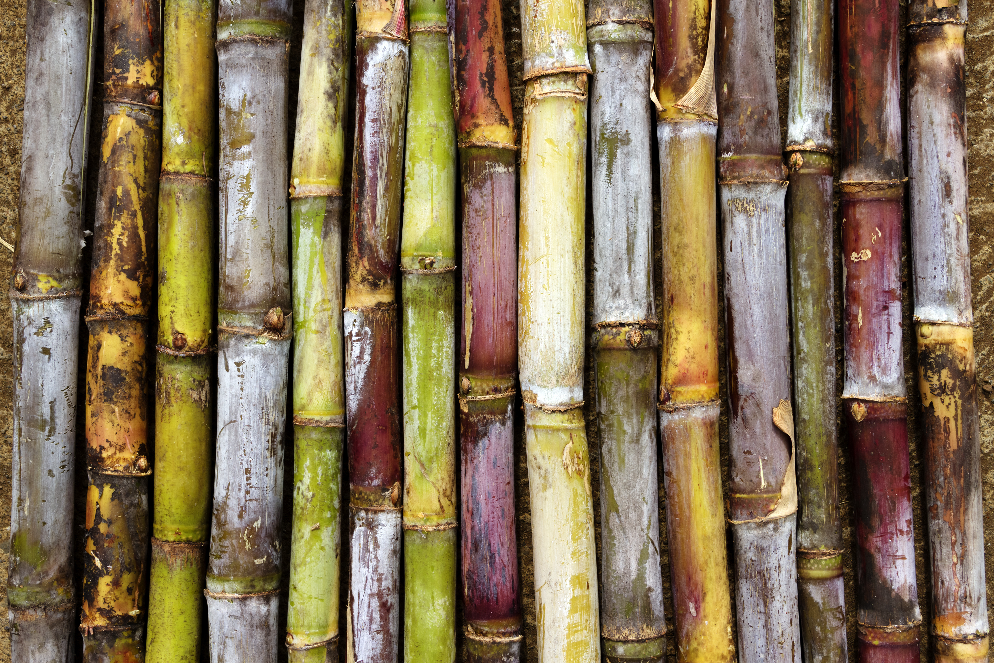 SUGARCANE SPIRITS - THE EXTENDED FAMILY OF RUM